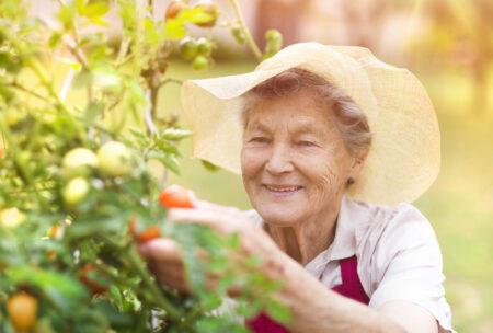 Health Benefits of Gardening for Seniors Rosewood